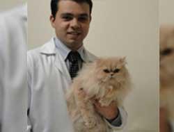 Veterinário de Gatos